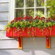 Cây xanh phong thủy trong nhà- Khung cửa sổ đầy hoa