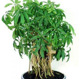 cây xanh phong thủy văn phòng