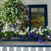 Cây xanh phong thủy trong nhà