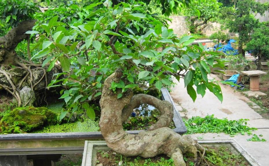 12 loại cây đem lại may mắn cho ngày Tết h5