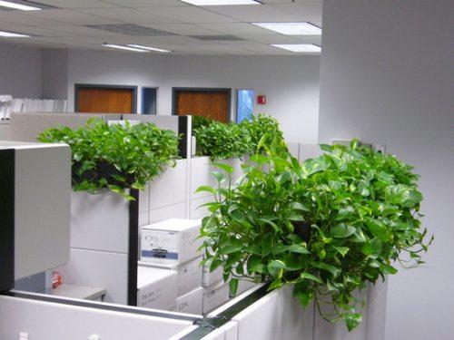 cây xanh trong nhà và phong thủy
