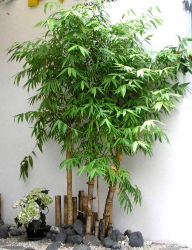 phong thủy cây xanh trong nhà ở