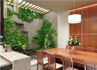 Trồng cây theo phong thủy trong nhà