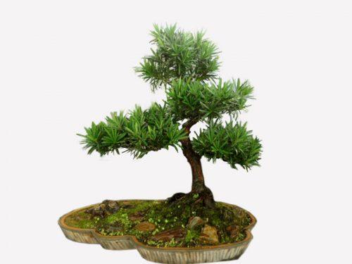 cây để trong nhà theo phong thủy