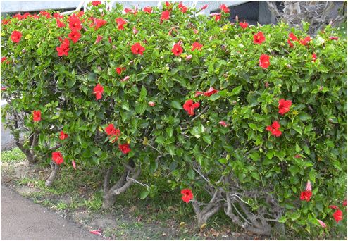 phong thủy cây cảnh sân vườn