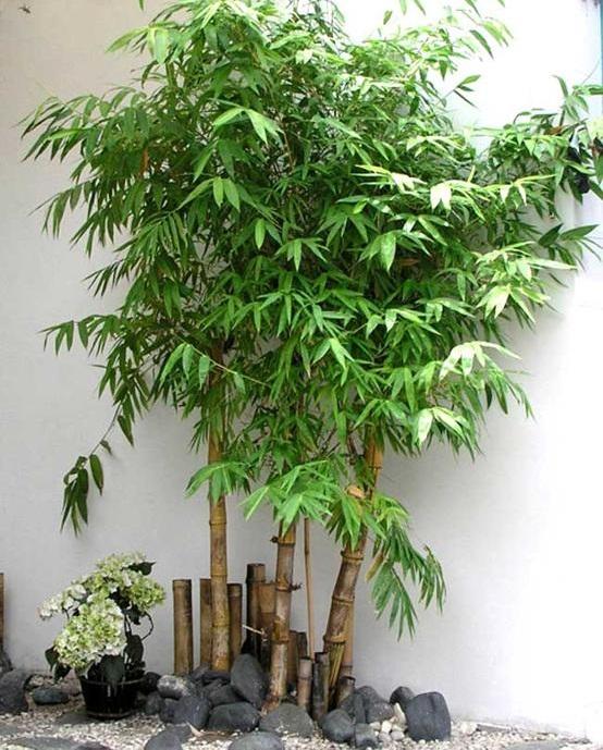 phong thủy cây xanh trong nhà
