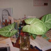 phong thủy cây xanh trong văn phòng