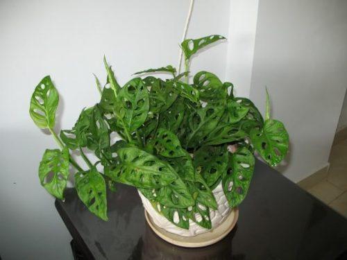 phong thủy cây xanh văn phòng