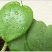 phong thủy cây xanh
