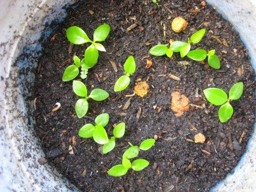 trồng cây cảnh theo phong thủy