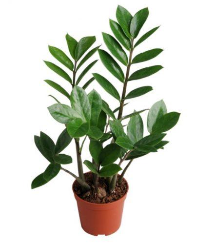 cây cho người mệnh mộc-