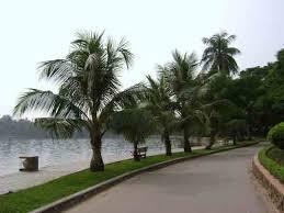 cây dừa cảnh theo phong thủy