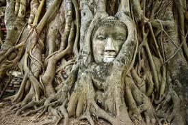 cây mệnh mộc