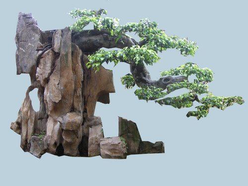 cây sanh theo phong thủy