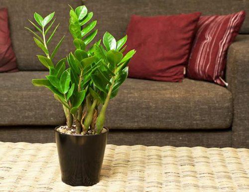 cây tốt cho mệnh mộc (2)