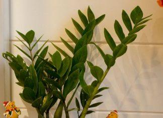 mạng kim trồng cây gì hợp