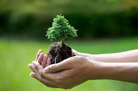 mạng mộc hợp cây gì (2)