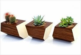 mạng mộc trồng cây gì