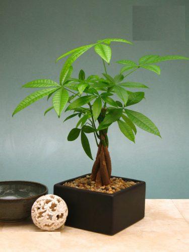 mệnh hỏa trồng cây gì trong nhà