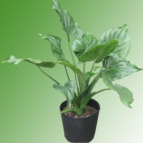 mệnh thủy nên trồng cây gì