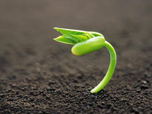 mệnh thủy trồng cây gì (3)