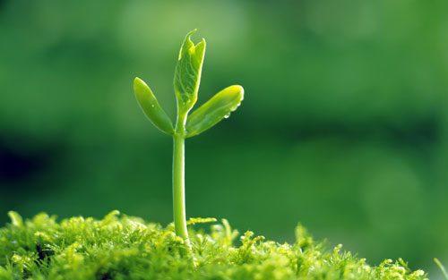 mệnh thủy trồng cây gì (4)