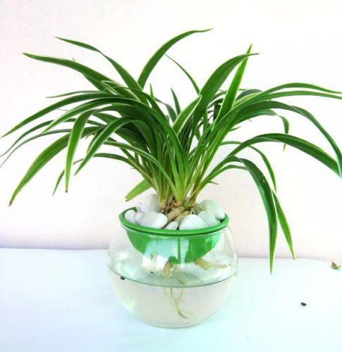 mệnh thủy trồng cây gì (5)