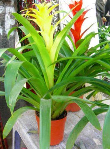 người mệnh kim nên trồng cây gì trong nhà