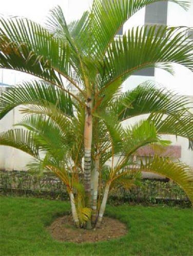 phong thủy trồng cây xanh ở trước nhà
