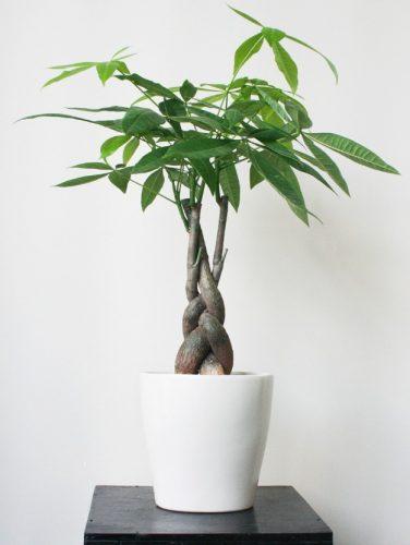trồng cây hợp mệnh hỏa
