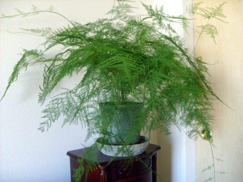 cây cảnh nội thất theo phong thủy