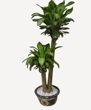 mạng thủy trồng cây gì (3)