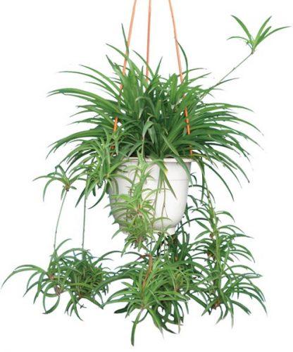 mạng thủy trồng cây gì (4)