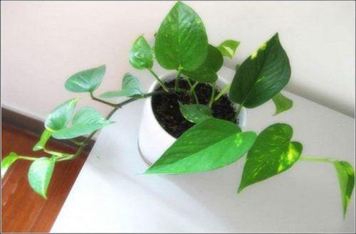 mạng thủy trồng cây gì (6)