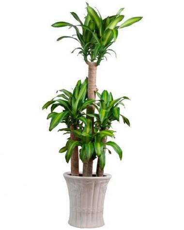 mạng thủy trồng cây gì (7)
