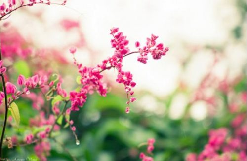 trồng cây dây leo theo phong thủy