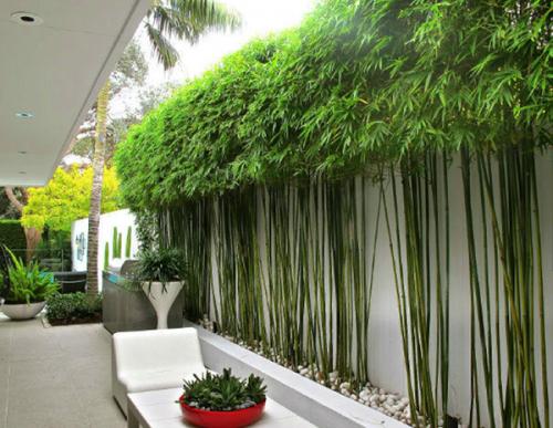 trồng cây trước sân nhà theo phong thủy