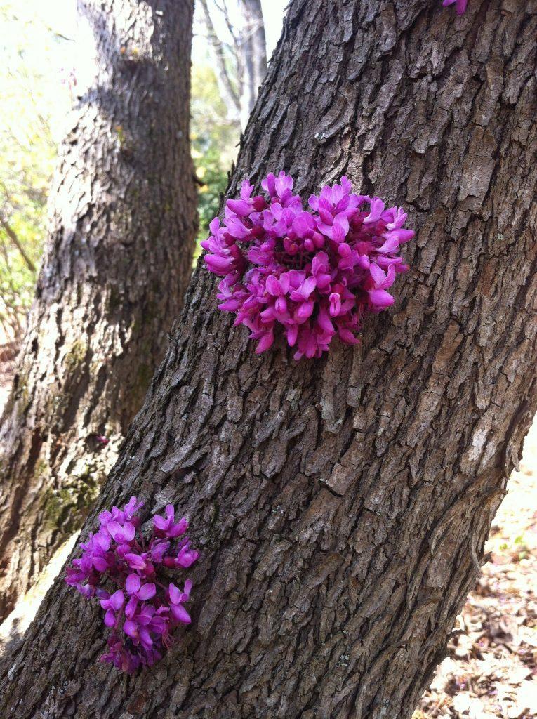 Hoa cây hạnh phúc