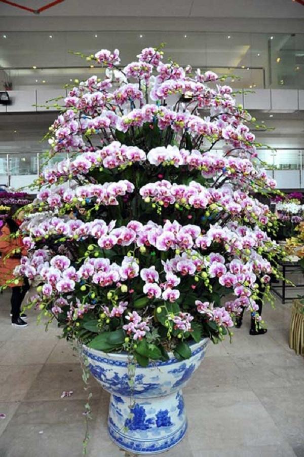 Hoa lan hồ điệp trưng ở sảnh công ty